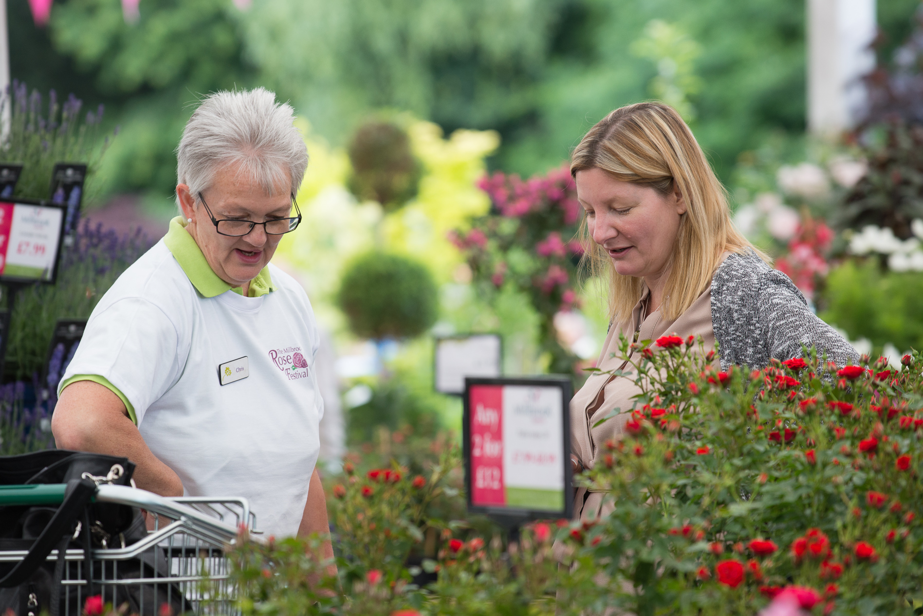 Event-Photography-Millbrook-Garden-Centre-Rose Festival-2016-13