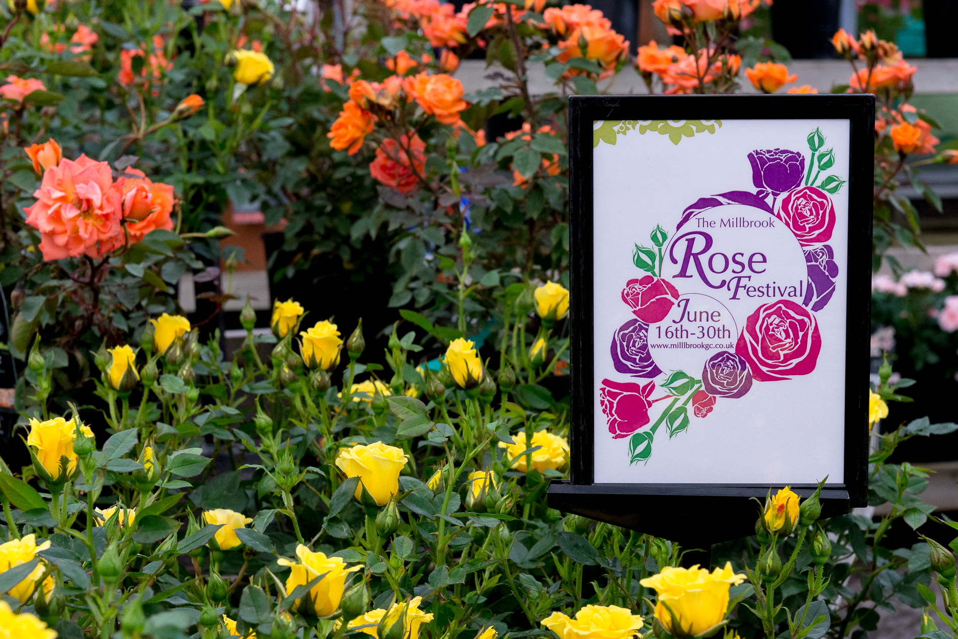 Event-Photography-Millbrook-Garden-Centre-Rose-Festival-3