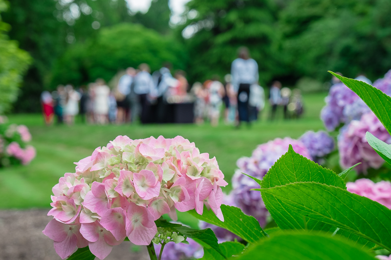 Hydrangeas on the Lawn | Oakhouse Photography